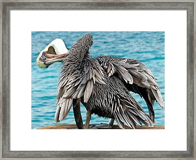 Awkward Pelican Framed Print by Jean Noren