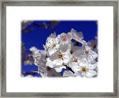 Awsome Blossoms Framed Print by Gerry Childs