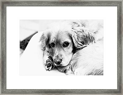 Framed Print featuring the photograph Aww...stevey by Polly Peacock