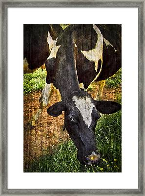 Awww Shucks Framed Print by Debra and Dave Vanderlaan