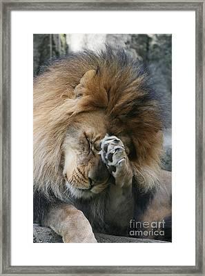 Awwwww..... Framed Print