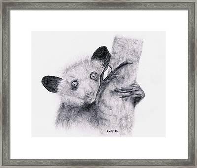 Aye-aye Framed Print by Lucy D