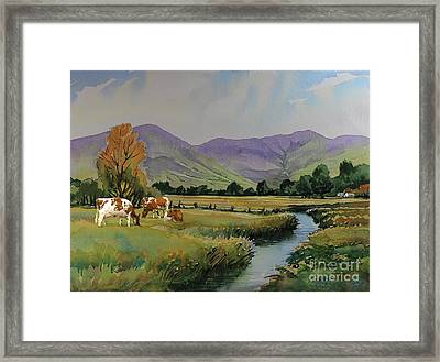 Ayrshire Cattle In Langdale Framed Print by Anthony Forster