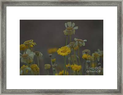 Framed Print featuring the photograph Az Flowers by Rod Wiens