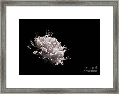 Azalea Black And White Floral  II Framed Print by Holly Martin