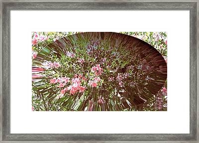 Azalea Bouquet Framed Print by Pamela Hyde Wilson