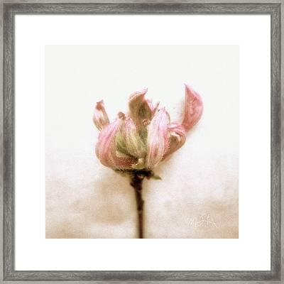 Framed Print featuring the photograph Azalea Bud by Louise Kumpf