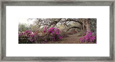 Azalea Garden Pano Framed Print