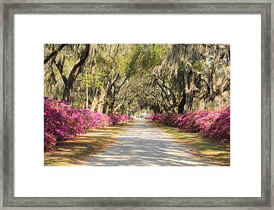 Framed Print featuring the photograph azalea lined road in Spring by Bradford Martin