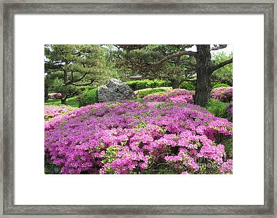 Azalea Path Framed Print