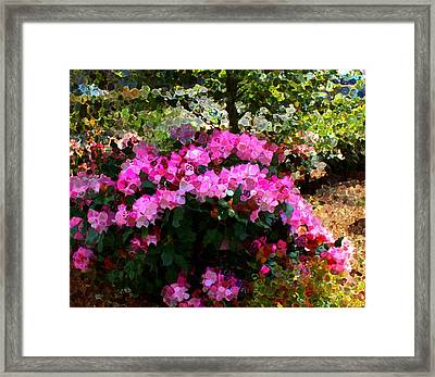 Azalea Framed Print by Terence Morrissey