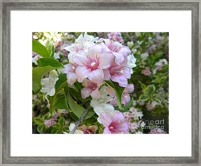 Azaleas 2 Framed Print by Laura Yamada