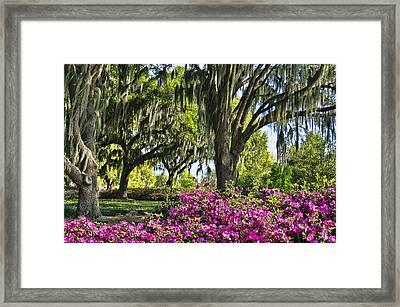 Azaleas 6 Framed Print by Betty Eich