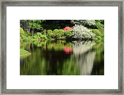 Azaleas And Other Shrubs Are Reflected Framed Print by Darlyne A. Murawski
