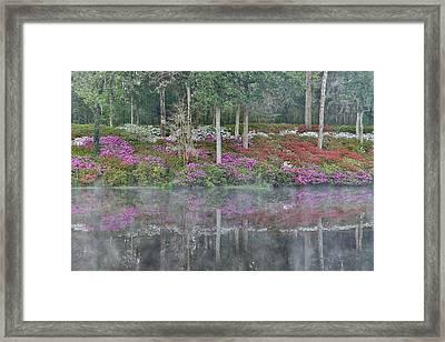 Azaleas In Full Bloom Reflected In Calm Framed Print