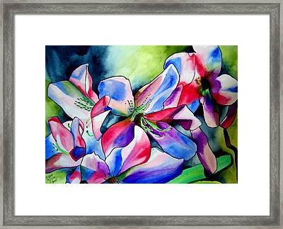 Azaleas Framed Print by Sacha Grossel