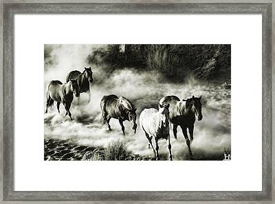 B And W Hosses Framed Print