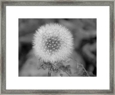 B And W Seed Head Framed Print