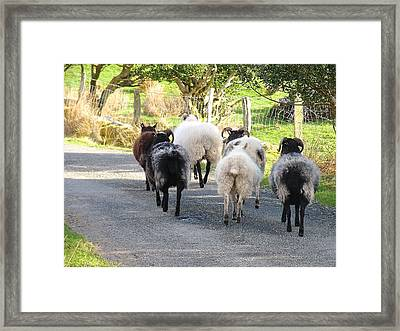 Ba Ba Blacksheep Framed Print by Suzanne Oesterling