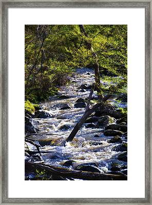 Babbling Brook Framed Print by Bill Cannon