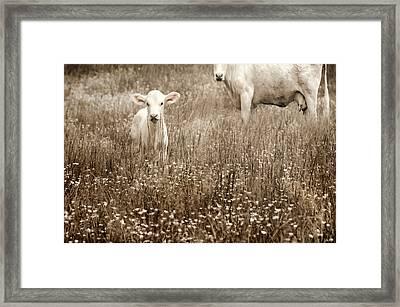 Babe Of Mine Framed Print
