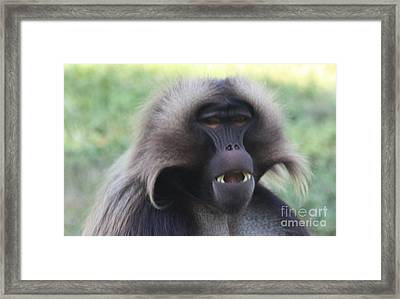 Framed Print featuring the photograph Baboon by John Telfer