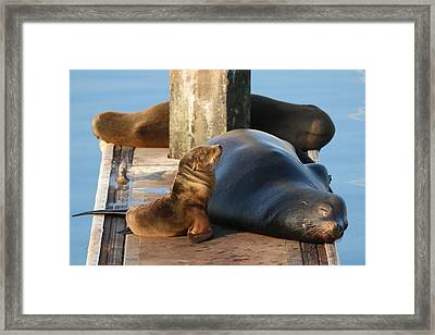 Baby And Me  Framed Print