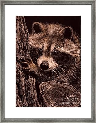 Baby Bandit Framed Print