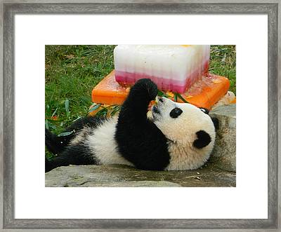 Baby Bao Bao's First Birthday Framed Print by Emmy Marie Vickers