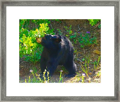 Baby Bear Cub Framed Print by Jeff Swan
