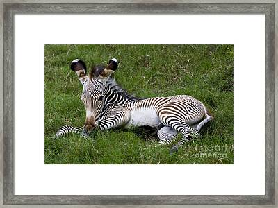Framed Print featuring the photograph Baby Black And White Beauty by Ruth Jolly