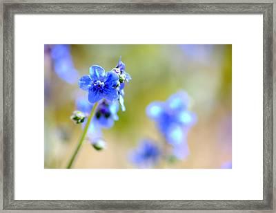 Baby Blu Framed Print by Martina  Rathgens
