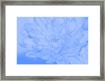 Baby Blue 3 Framed Print by Carol Lynch