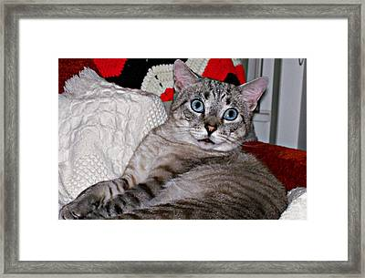 Baby Blue Framed Print by Barbara S Nickerson