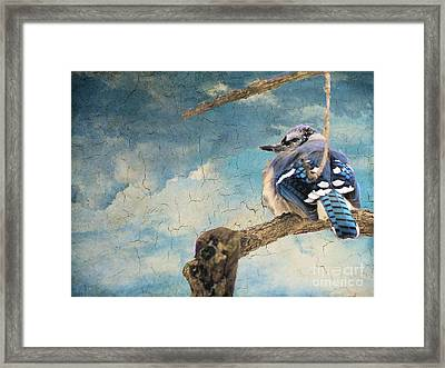 Baby Blue Jay In Winter Framed Print