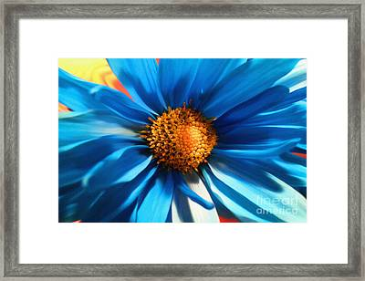 Baby Blues Framed Print by Diane E Berry