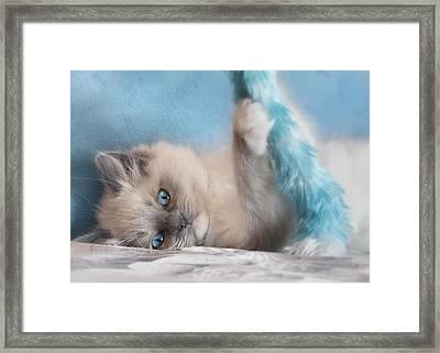 Baby Blues Framed Print by Lori Deiter