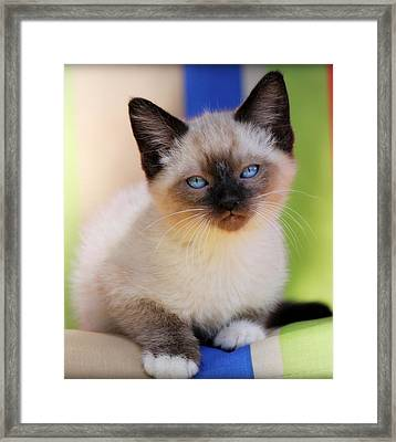 Framed Print featuring the photograph Baby Blues by Melanie Lankford Photography