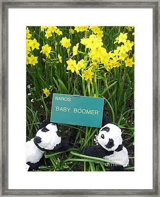 Baby Boomers Framed Print by Ausra Huntington nee Paulauskaite