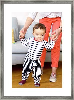 Baby Boy Learning To Walk Framed Print by Aj Photo