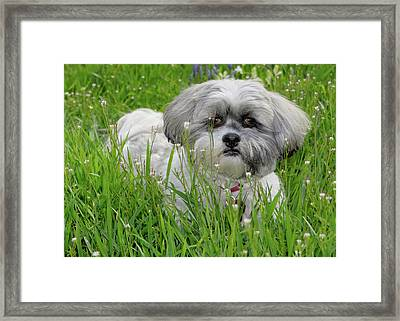 Baby Breath Framed Print by Arthur Fix