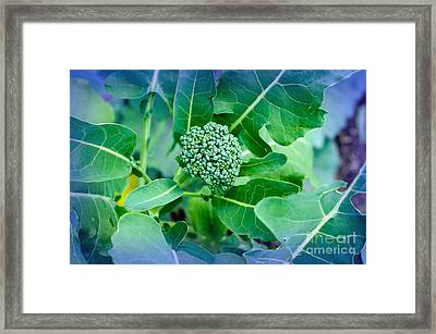 Baby Broccoli - Vegetable - Garden Framed Print by Andee Design