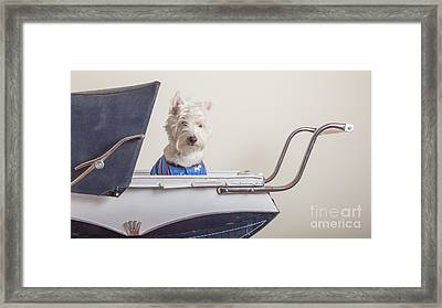 Baby Buggy Ride Framed Print by Edward Fielding