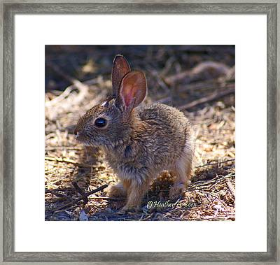 Baby Bunny Framed Print by Heather Coen