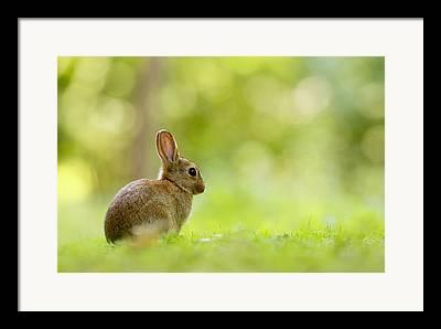 Easter Framed Prints
