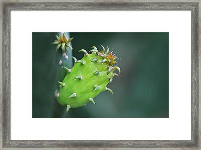 Baby Cactus - Macro Photography By Sharon Cummings Framed Print