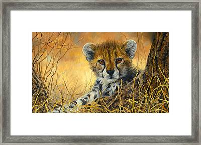 Baby Cheetah  Framed Print by Lucie Bilodeau
