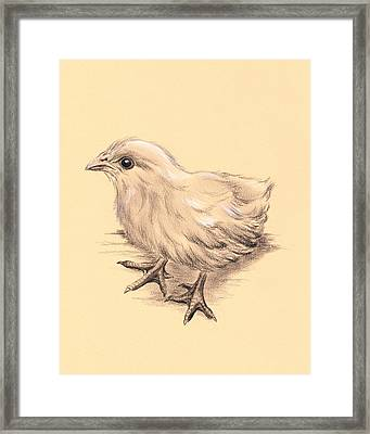 Baby Chicken Framed Print by MM Anderson
