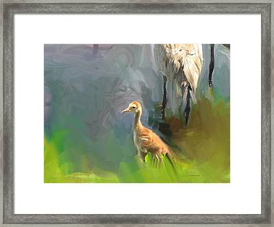 Baby Crane And Mom Framed Print