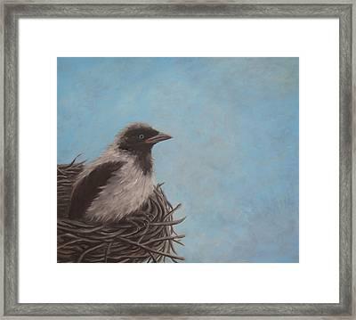 Baby Crow Framed Print